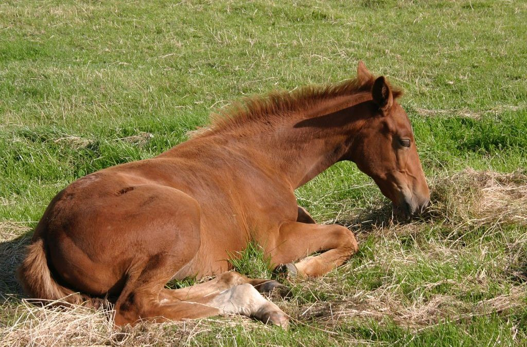 Feeding and Management of Weanlings
